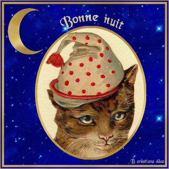 Bonne nuit - chat