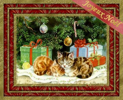 Noël - chatons
