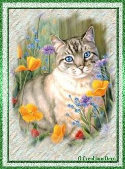 chat - fleurs