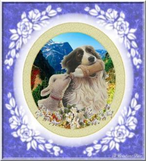 chien berger - mouton