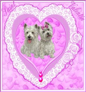 Saint Valentin - chien - scottisch