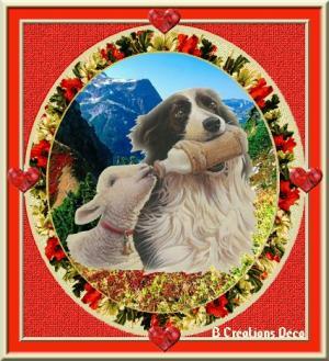 chien de berger - mouton