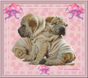 Saint Valentin - chien - amoureux - sharpei