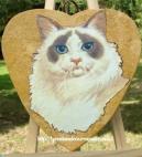 chat siamois - coeur