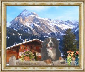 Bouvier bernois - chalet - Suisse