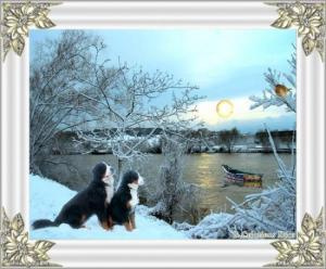 bouvier bernois - lac - neige