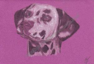 dalmatien - dessin
