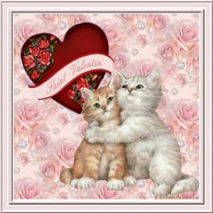 Saint Valentin - chat