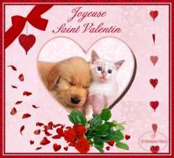 chiot-chaton-coeur-st-valentin.png