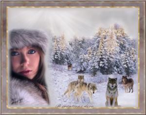 hiver - loups